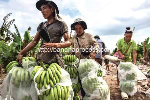 What's-Behind-Laos'-China-Banana-Ban
