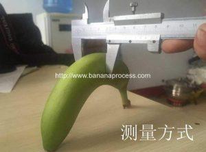 Green-Plantain-Banana-Peeling-Machine-Banana-Size-Measure-Method