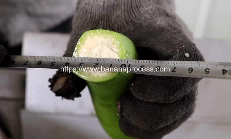 Puerto-Rico-Green-Banana-Peeling-Machine